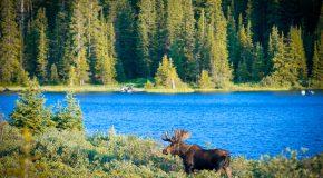 Tips and Tricks for Visiting Moraine Lake, Alberta